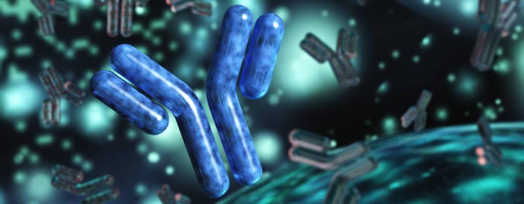 antibody-2